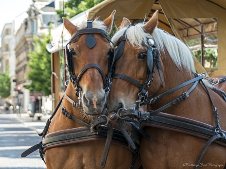 2017-05-25-Troyes-8541
